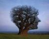 فلسفه و هدف آفرینش انسان